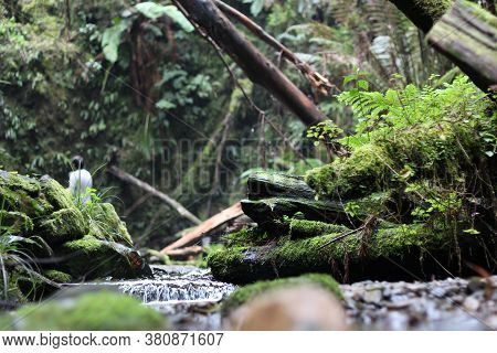 Babbling Brook, Water Running From A Waterfall Over Mossy Rocks, Fallen Trees And Ferns