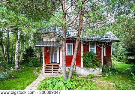 Pine Tree And Wooden Summerhouse In Russia In Summer