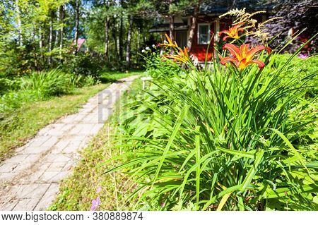 Flower Bed With Lily Flowers And Path To Summerhouse In Green Ornamental Garden In Russia On Sunny S