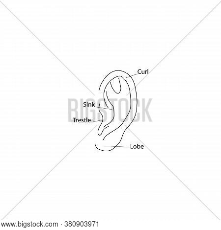 Ear Diagram Structure Icon. Vector Illustration Eps 10