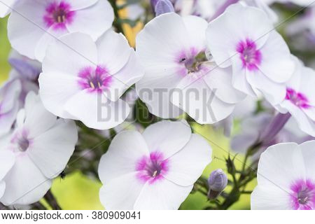 Macro Shot Colorful Flower. Agriculture Concept Design. Beautiful Flower In Tropical Garden. Colorfu