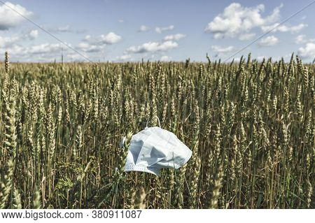 Used Disposable Mask Farm Field With Barley. The Problem Of Disposing Of Disposable Masks. Environme