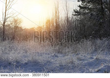 Forest Glade With Frosty Meadow Grasses In The Rays Of The Evening Sun