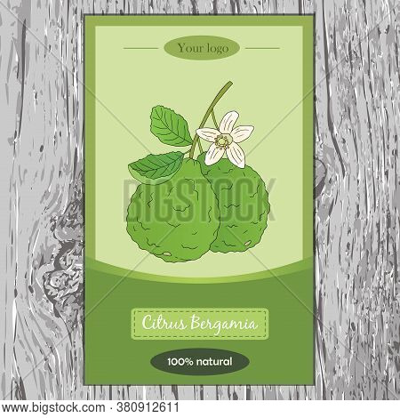 Organic Tea Collection. Vector Flyer With Hand Drawn Illustration Of Citrus Bergamia On A Wooden Bac