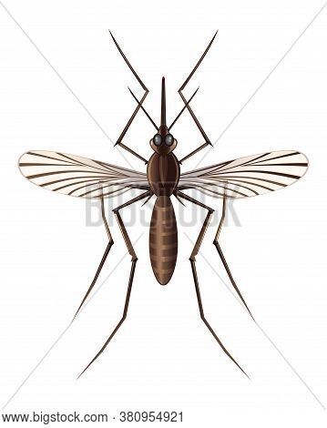 Realistic Illustration Of A Mosquito. Insect. Realistic Mosquito. Vector Image Of A Mosquito Isolate