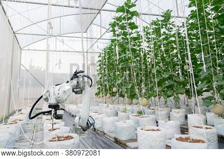 Smart Farming Fruit Melon And Digital Agriculture Robotic Arm Is Working