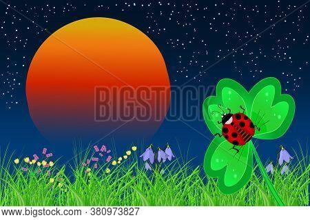 Ladybird On The Leaf On A Sunset Background. Ladybug Sleeping By Night On Clover Leaf. Beautiful Nig