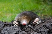 A mole is crawling through the sand poster