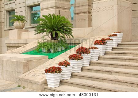Cycas, Flowers In The Garden In A Hotel