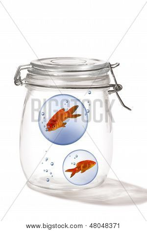 Goldfish in a glass jar swimming around. poster