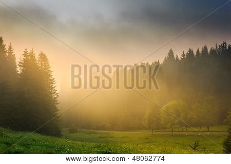 Sun Rays Breaking Through The Clouds And Fog In Forests