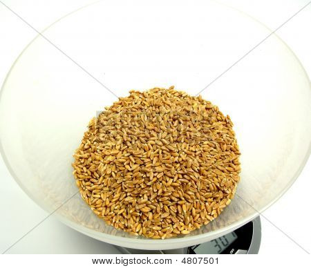 Spelt In A Scale Pan On White Background
