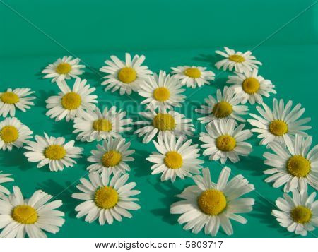 Background of Camomile 1