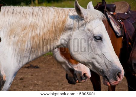 Horses In A Corral