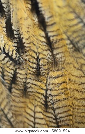 Closeup Eurasian Eagle Owl feathers, abstract background poster