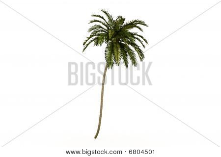 Palm isolated