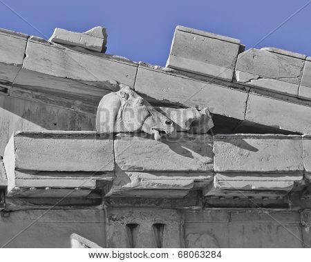Athens Greece, Parthenon detail horse head