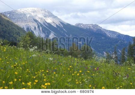 Landscape View Of Grass And Mountains In The Background