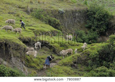 Leben In den Anden Ecuadors
