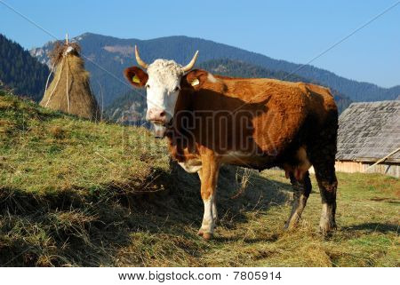 Rural Landscape In Romania