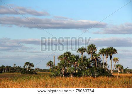 Palm Hammocks