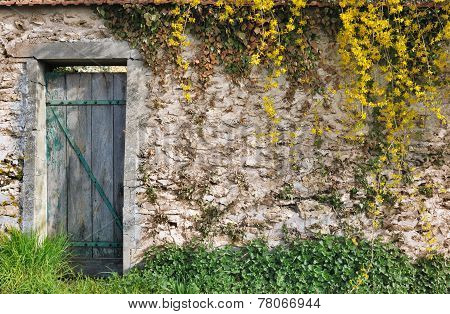 Garden Wall With Vegetation