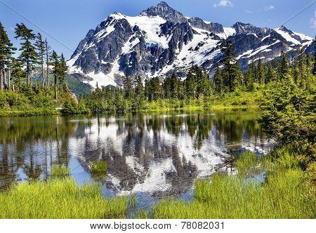 Picture Lake Evergreens Mount Shuksan Washington Usa