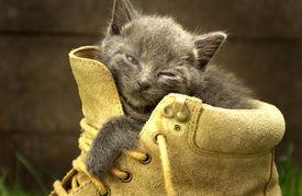 Sleepy Kitten