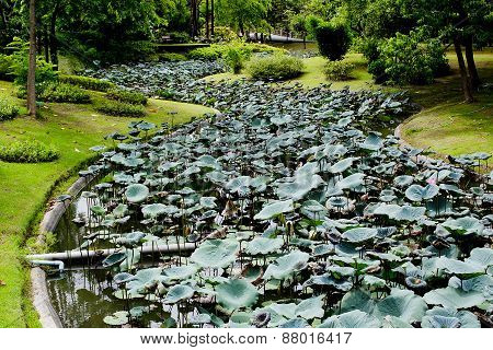 Lotus And Waterlilly Garden