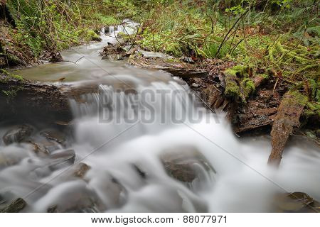 Pacific Northwest Rainforest Creek