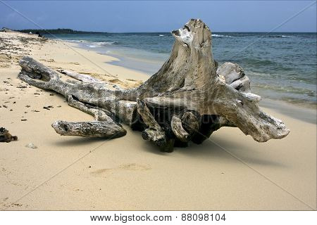 Beach And Tree In  Republica Dominicana