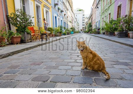 Cat sitting in the middle of a street in Paris