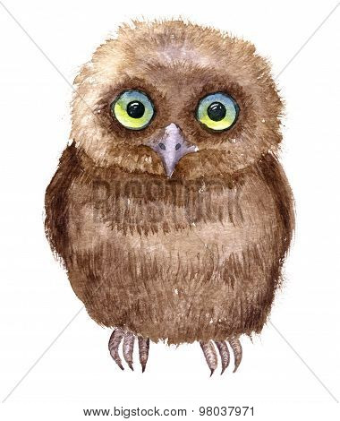 Little owl drawing by watercolor