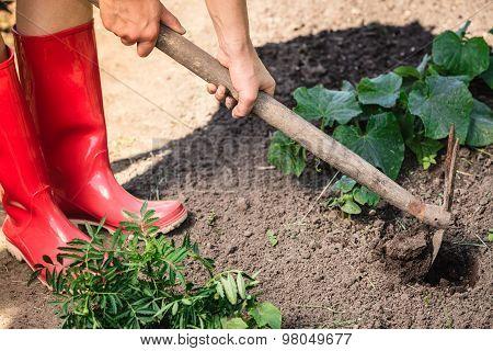 Closeup Woman Gardener Digging Soil