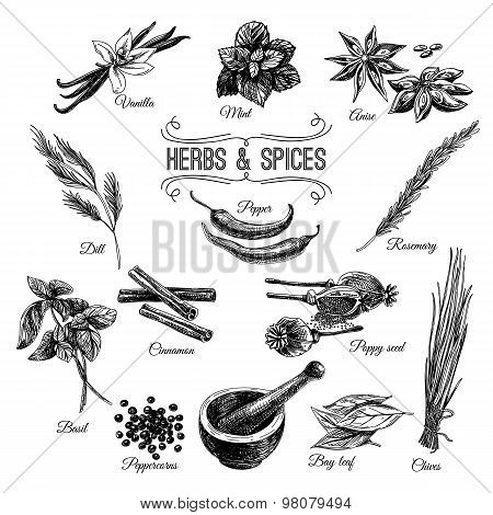 Vector hand drawn set with Herbs Spices. Illustrations collectio