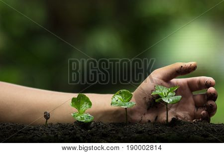 plant a tree,Protect the tree,Hand Help the tree,Growing step,Watering a tree,care tree,nature background