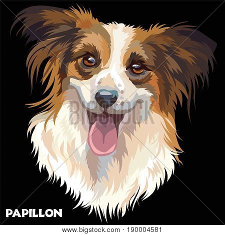 Colorful isolated vector portrait of dog Papillon on black background