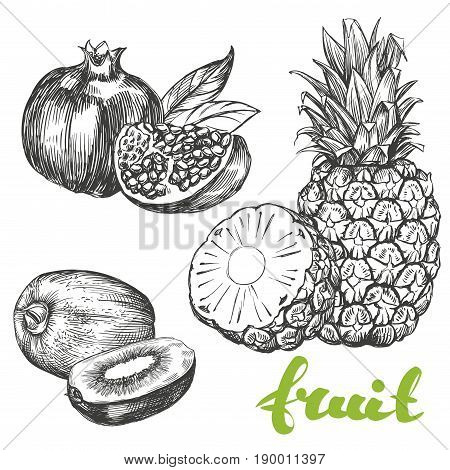 fruit pomegranate, kiwi, pineapple set hand drawn vector illustration realistic sketch