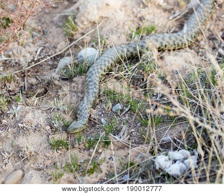 snake on the ground outdoors . A photo