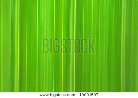 Tropical green flora background