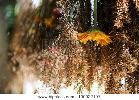 Dried plant hanging upside down