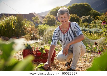 Portrait Of Mature Woman Working On Community Allotment