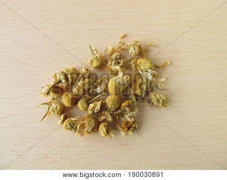 Chamomilla recutitia flowers, Matricariae flos, for herbal medicine