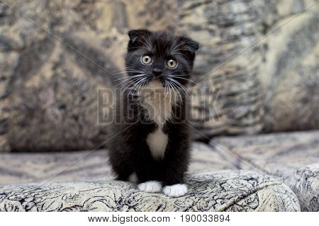 Beautiful kitten sitting on the couch the theme of kittens and cats