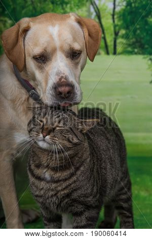 Dog and a cat nuzzling each other.