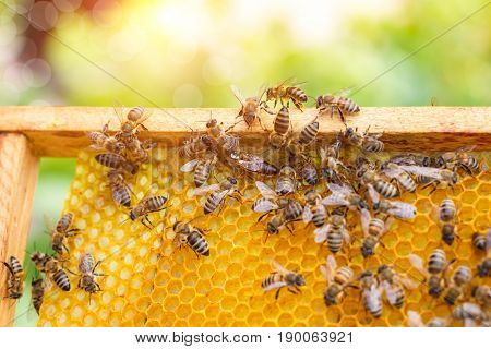 Bees Swarming On A Honeycomb.
