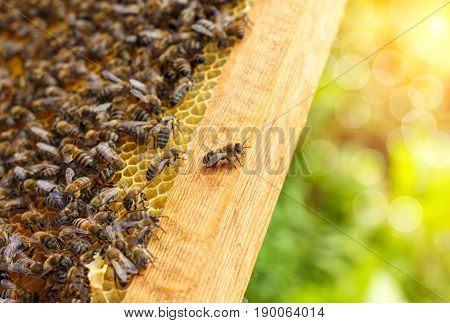 Bees In Honeycombs .