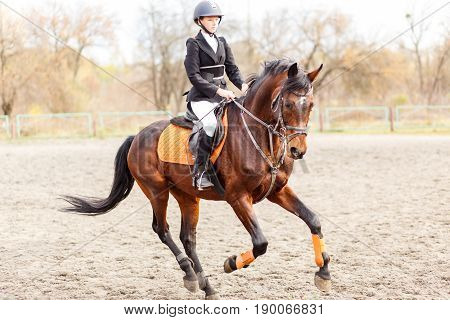 Young teenage rider girl on bay horse before jumping on show jumping competition