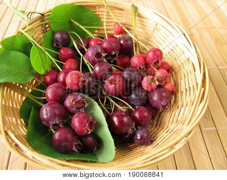 Juneberriy fruits and leaves in small basket