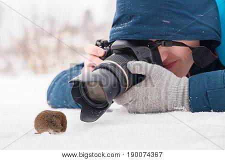 Young female photographer taking macro photos of a wood mouse (Apodemus sylvaticus) on snow close-up